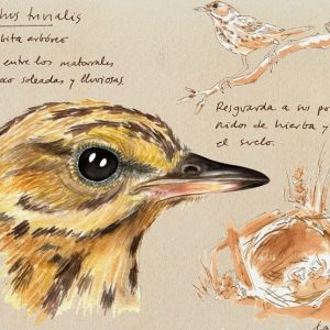 clara-cerviño-ilustracion